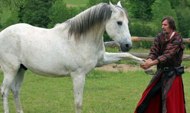 cheval à Salva Terra